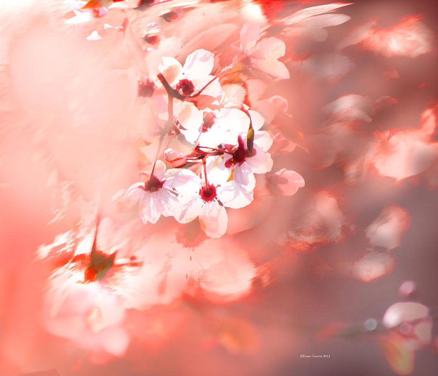 Spring Floral Photograph