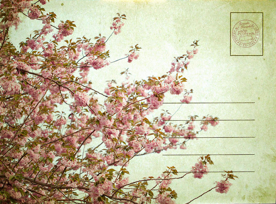 Cherry Blossoms Photograph - Spring Floral by June Marie Sobrito