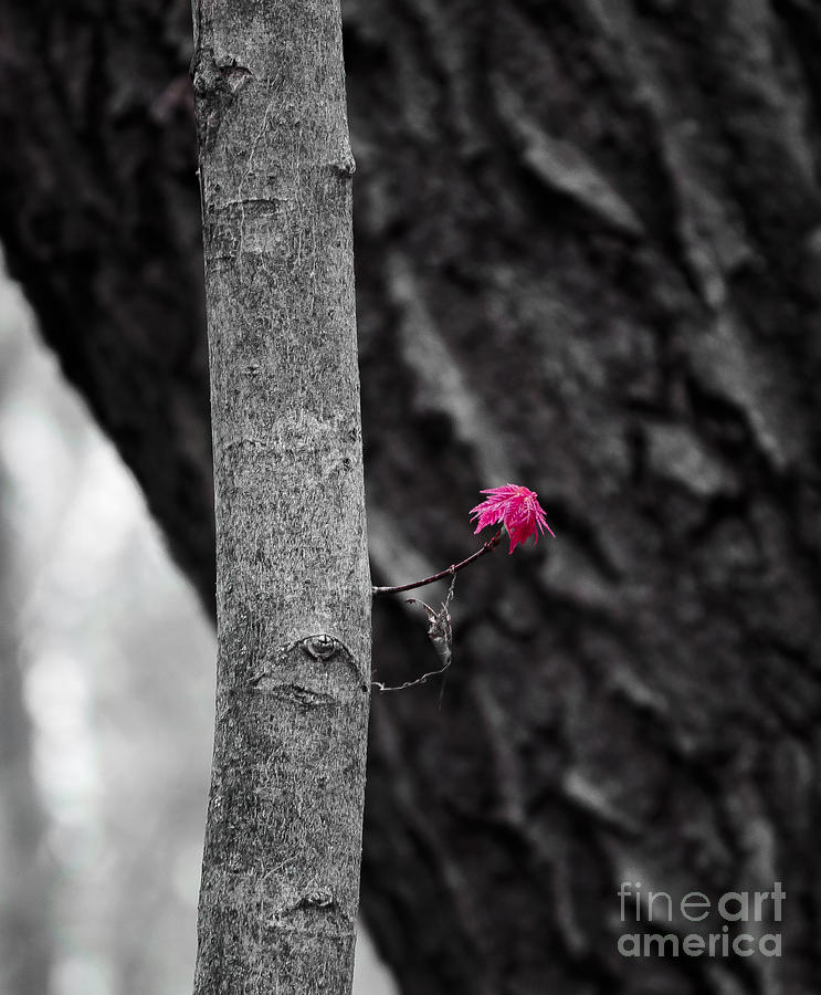 Spring Growth Photograph  - Spring Growth Fine Art Print