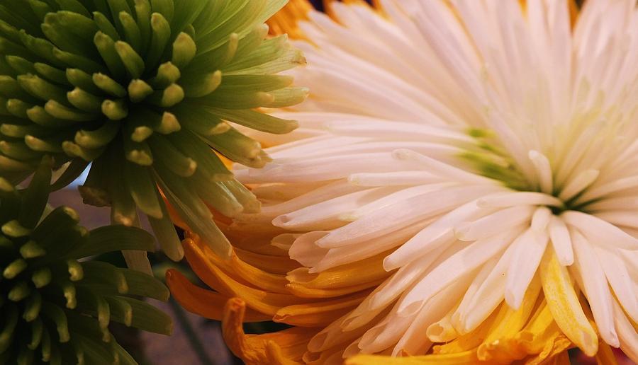 Spring Photograph - Spring Has Sprung II by Anna Villarreal Garbis