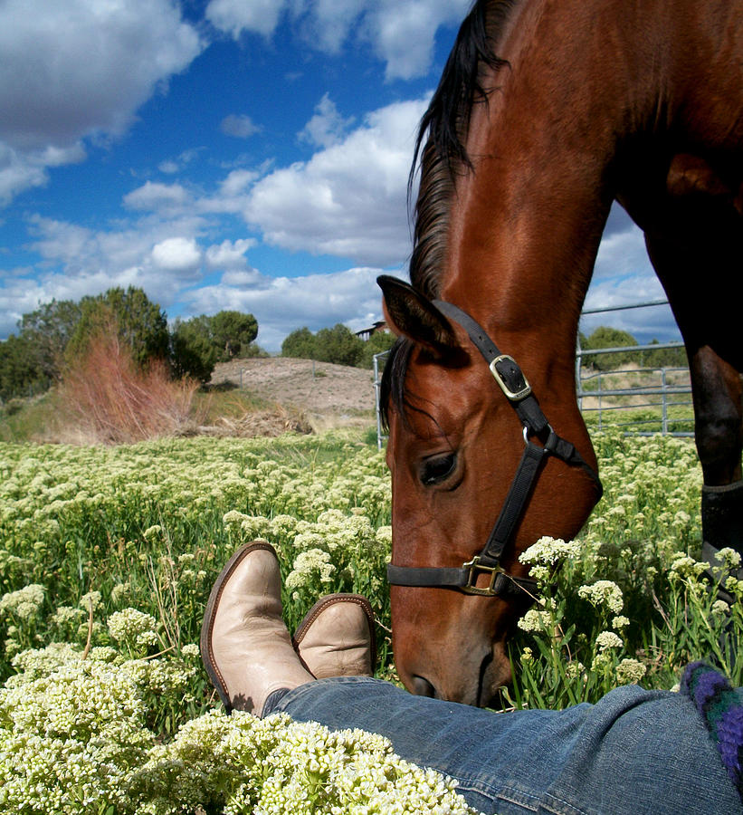 horse series spring love - photo #21