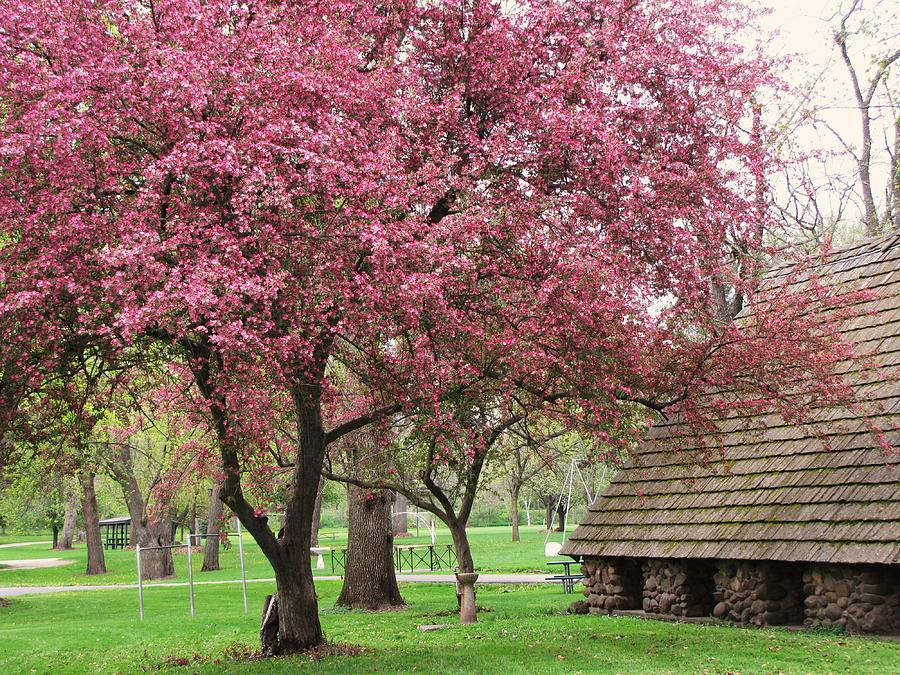 Trees Photograph - Spring In The Park by Lori Frisch