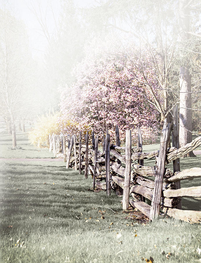 Spring Landscape With Fence Photograph