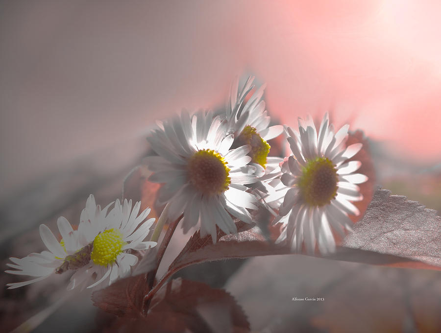 Spring Light Photograph  - Spring Light Fine Art Print