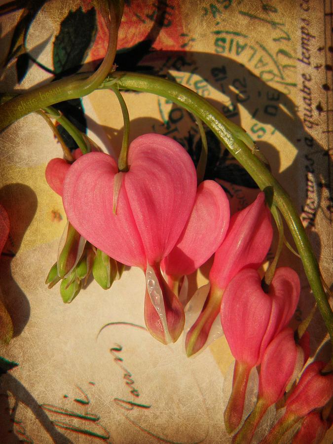 Spring Love Photograph