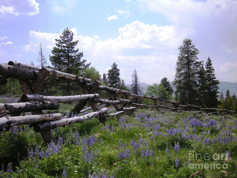 Mountains Photograph - Spring Mountain Lupines 2 by Crystal Miller