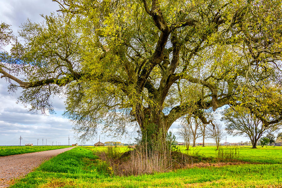 Spring On The Delta Photograph