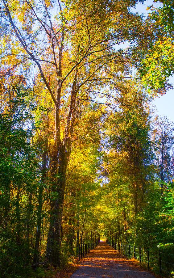 Spring Path Photograph