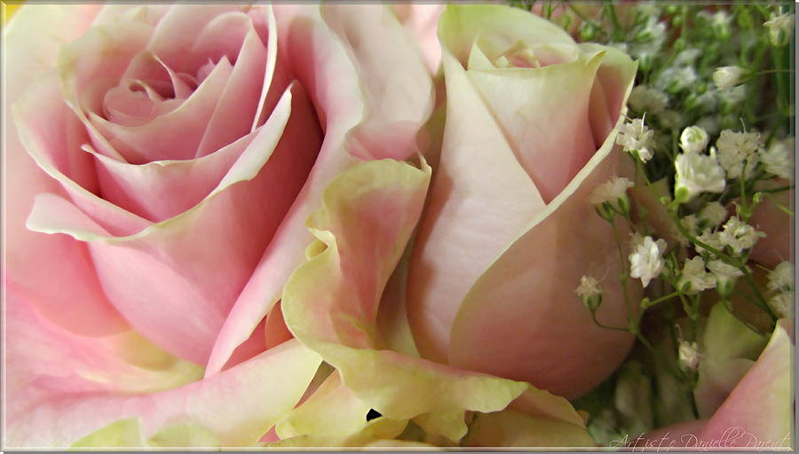 Spring Romance Pink Roses Photograph