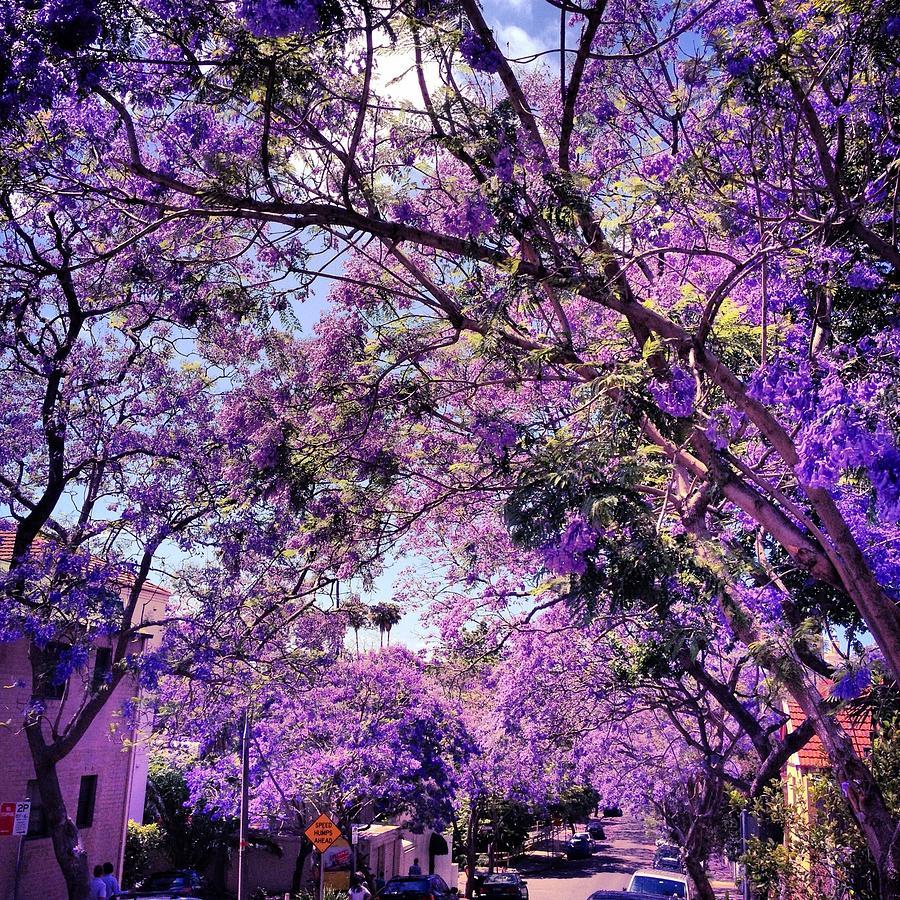 spring-season-natalia-nowak