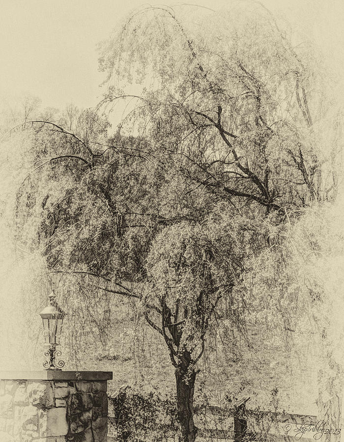 Trees Photograph - Spring by Skip Tribby
