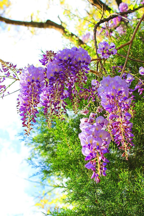 spring spirit by tiphs - photo #37