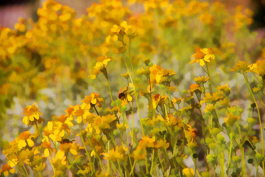 Wild Flowers Photograph - Spring by Tammy Espino