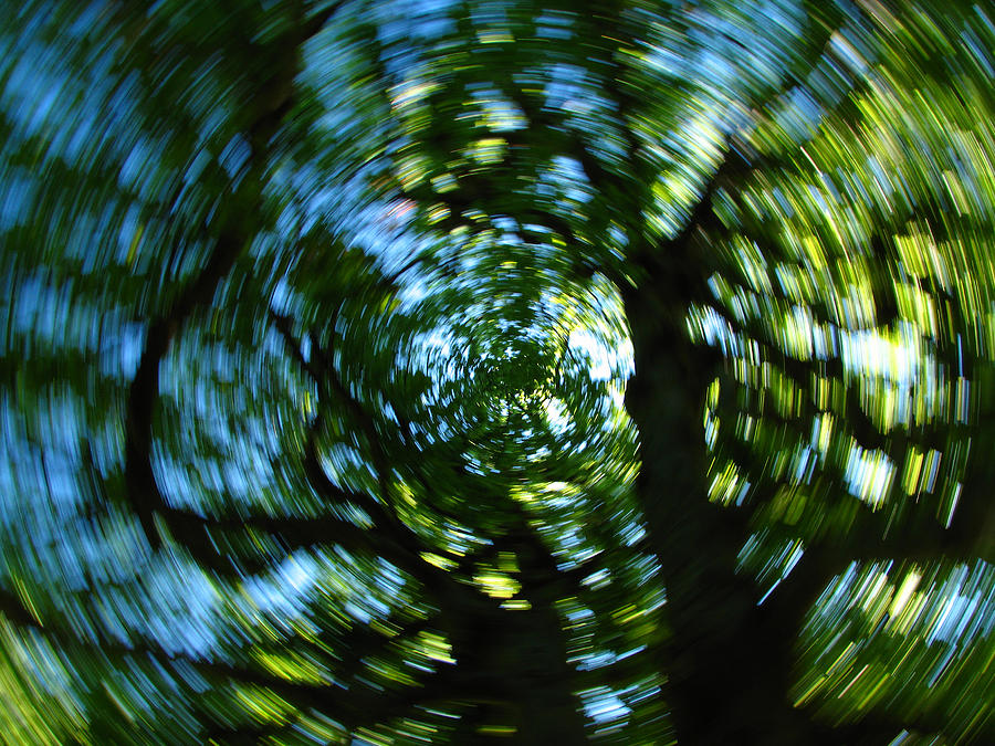 Intentional Camera Movement Photograph - Spring Tree Carousel by Juergen Roth