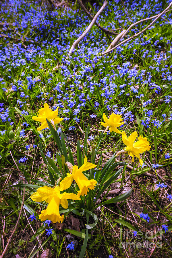 Spring Wildflowers Photograph