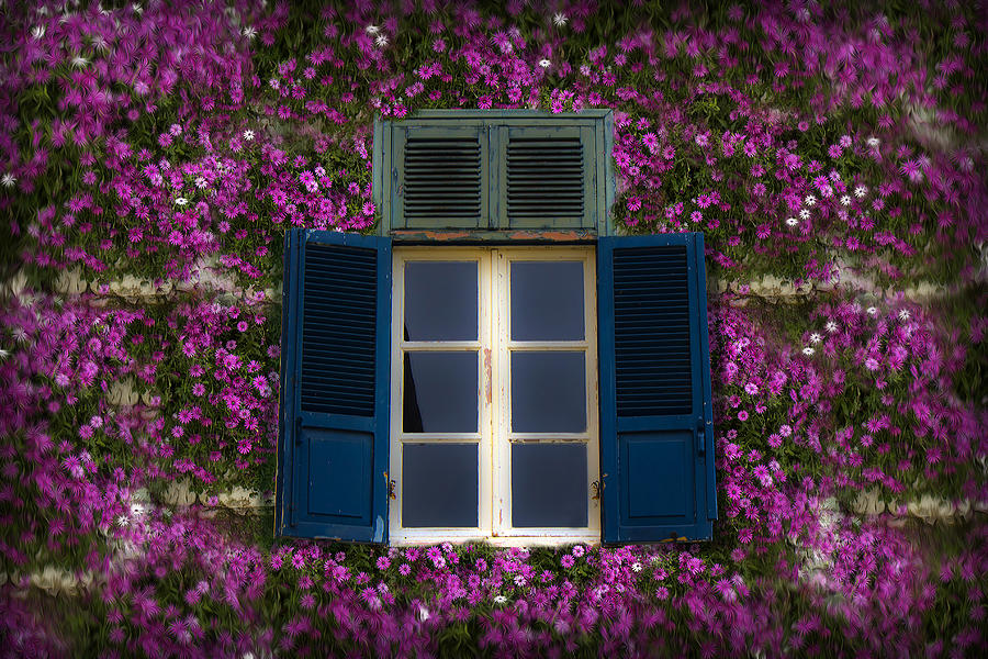 Spring Window Photograph