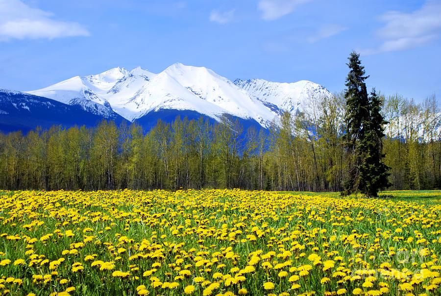Springtime Dandelions Painting