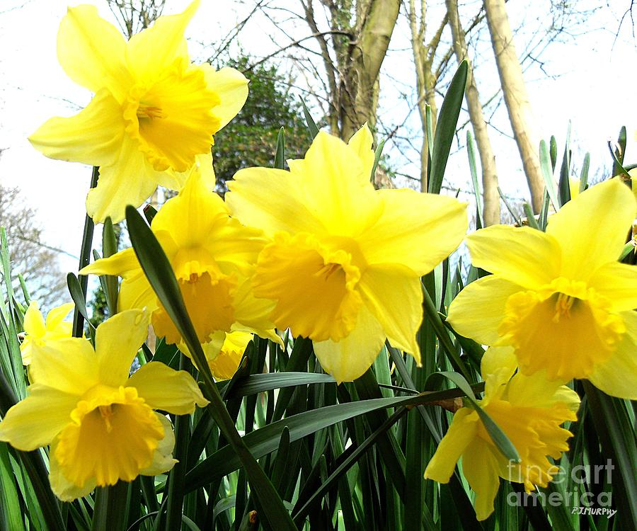 Springtime In Ireland Photograph