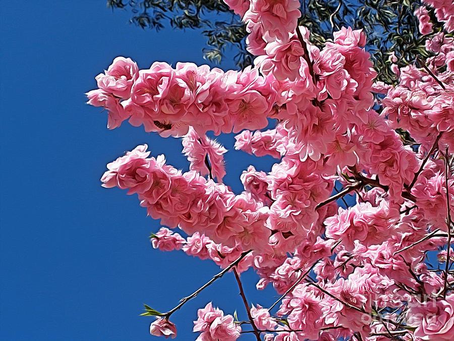 Springtime Pink Photograph