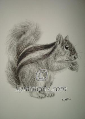 Portrait Mixed Media - Squirrel by Kuntal Chaudhuri