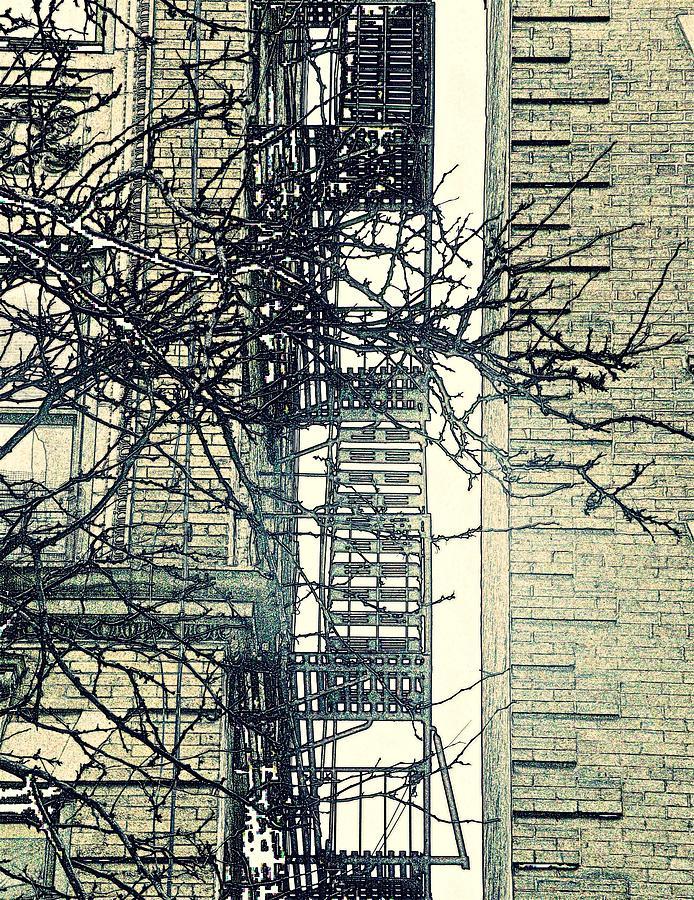 St Johns Ladder Photograph