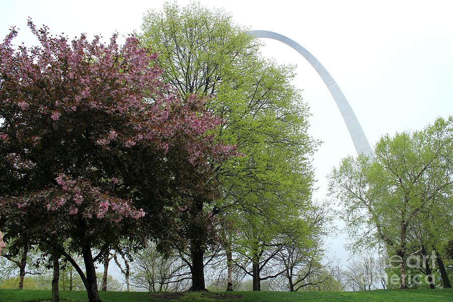 St. Louis Photograph - St. Louis Spring by Theresa Willingham