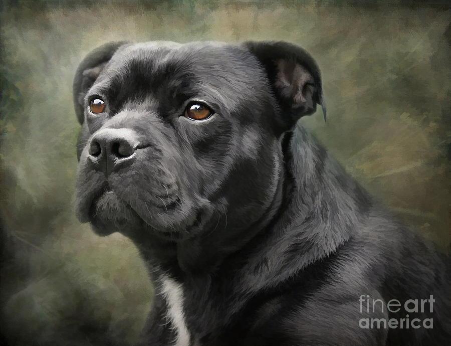 Staffordshire Bullterrier Digital Art