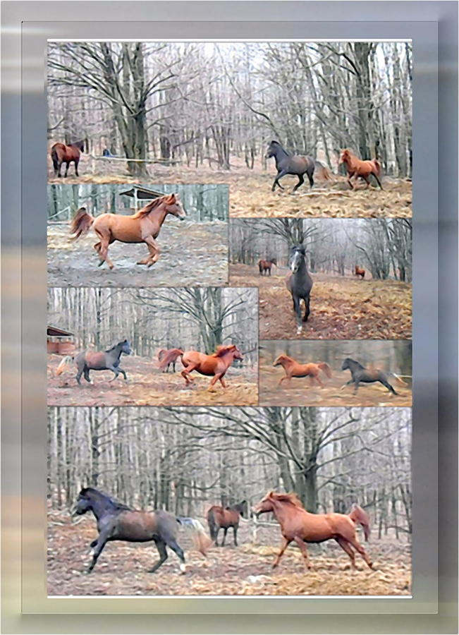Stallions Photograph - Stallions Enjoy Some Horsing Around by Patricia Keller