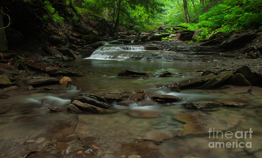 Gorge Photograph - Standing In The Stream by Steve Clough
