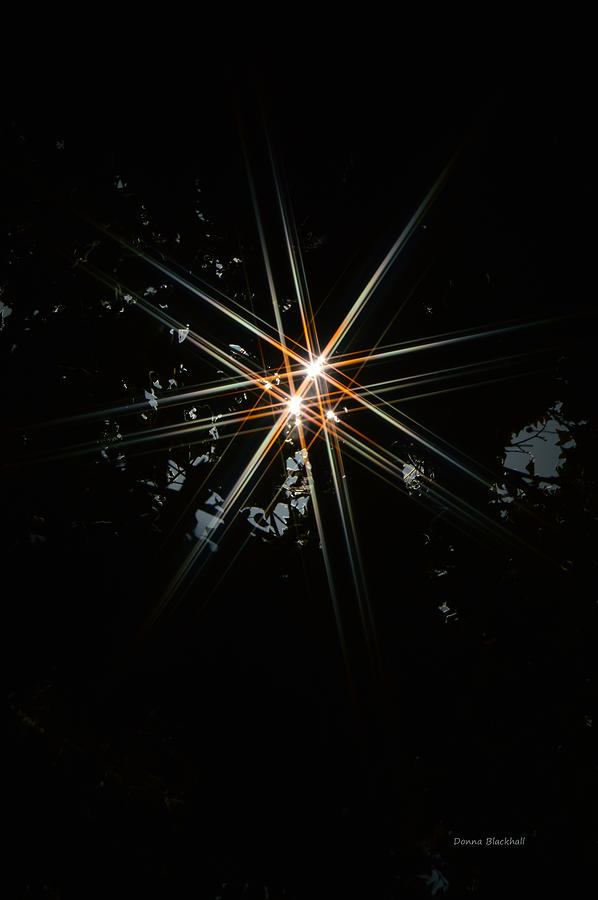 Star Photograph - Star Bright by Donna Blackhall