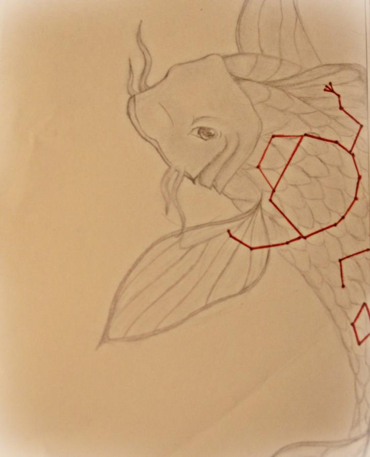 Kio Fish Drawing - Star Fish by Kaleigh Higgs