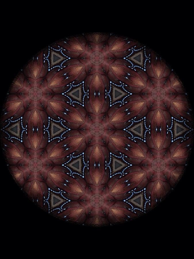 Star Octopus Mandala Digital Art