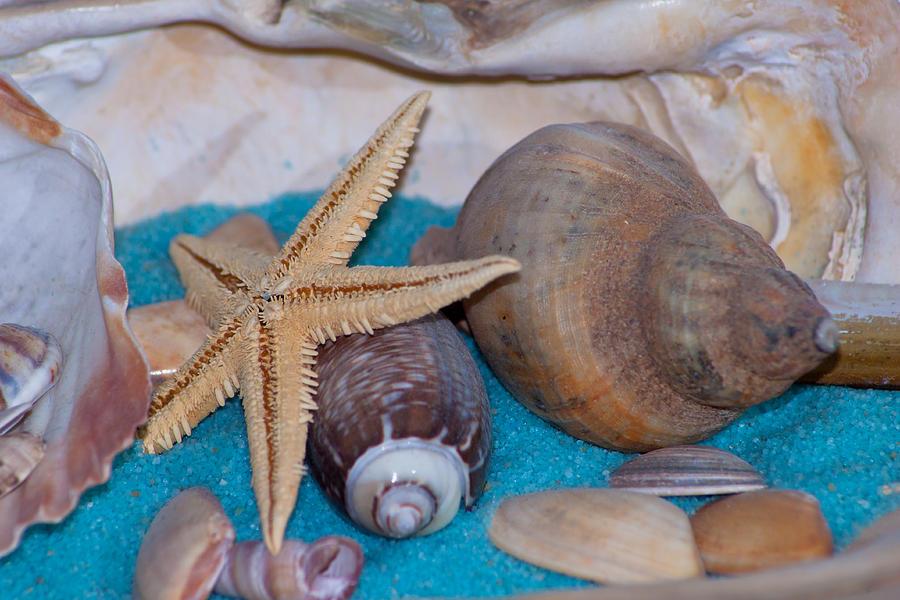 Starfisch In A Shell Photograph By Reiner Dietermann
