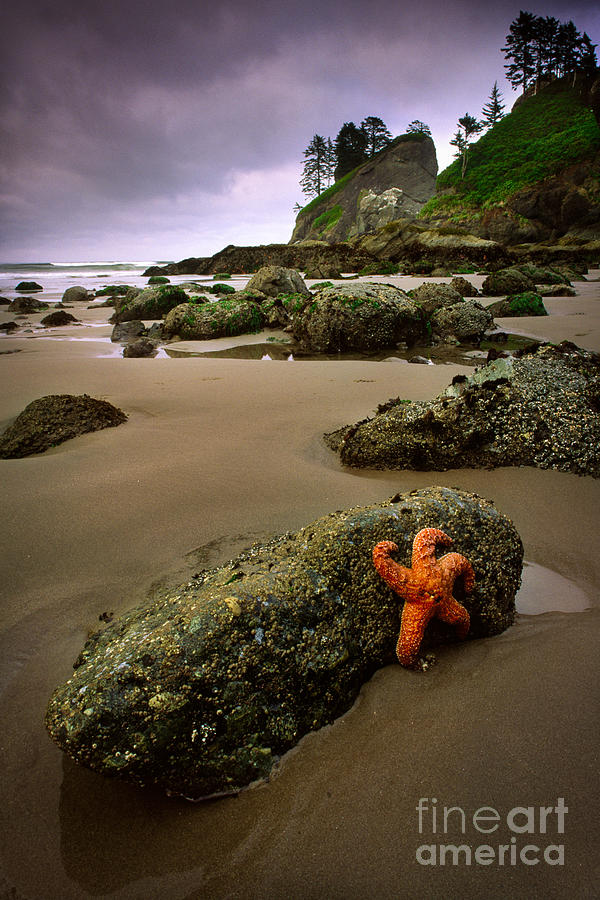 Starfish On The Rocks Photograph