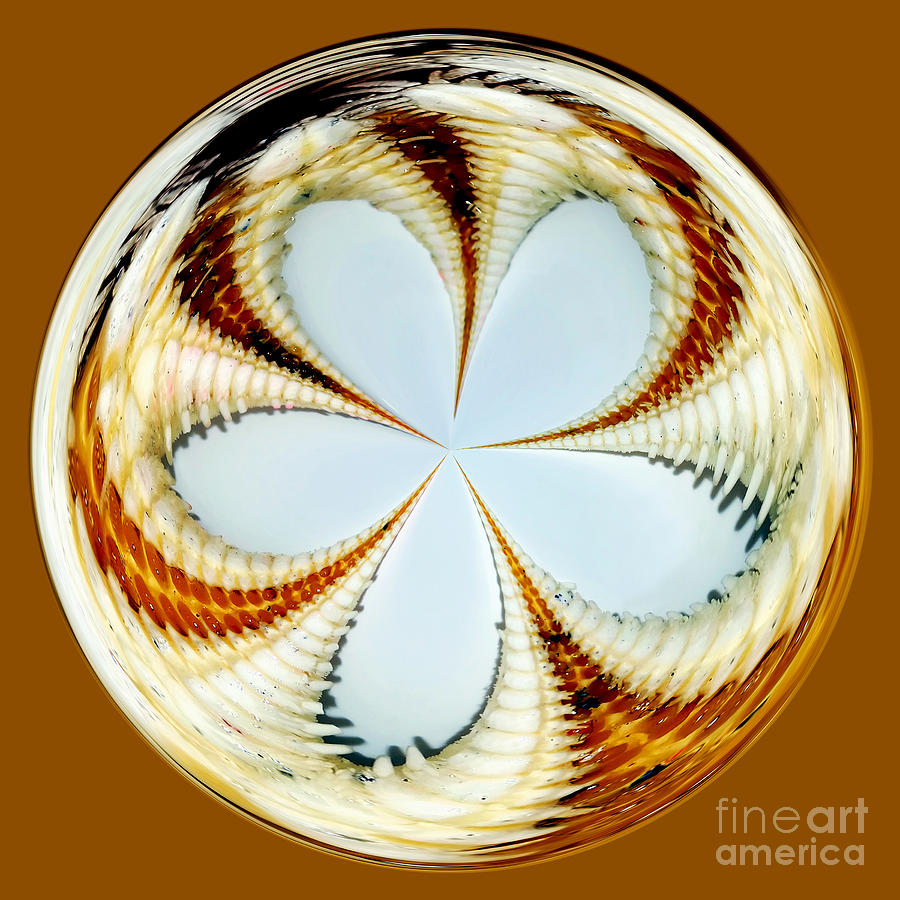 Starfish To Flower - Orb Photograph