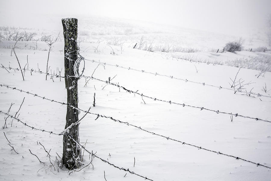 Stark Realities Of Winter Photograph