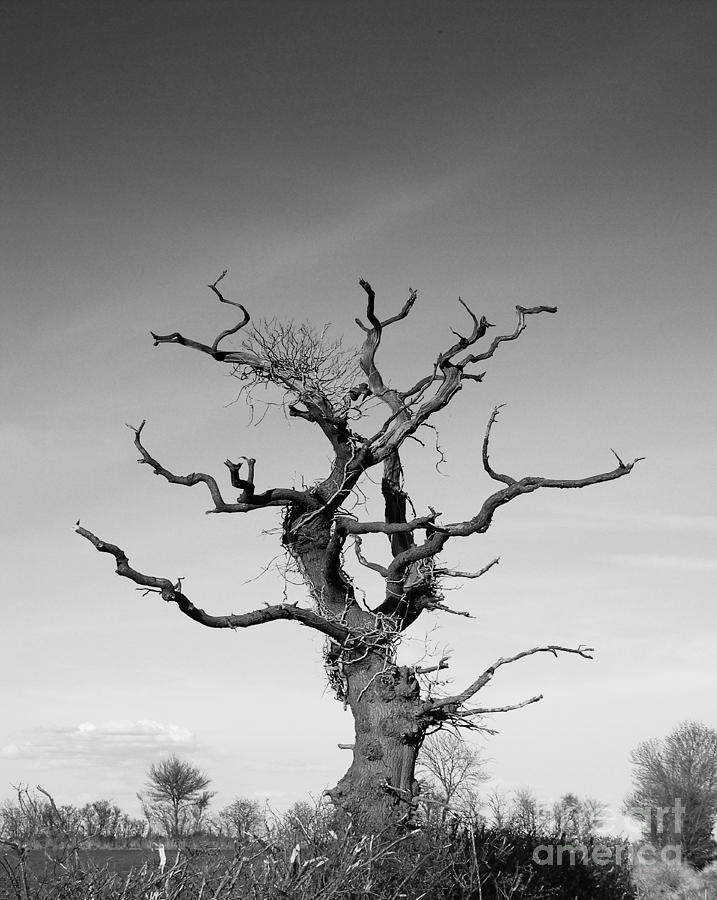 Landscape Photograph - Stark Tree by Pixel Chimp