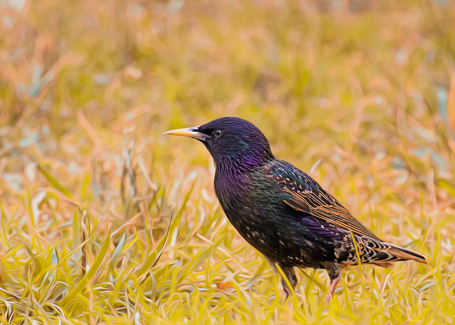 Starling On Lime Grass Photograph