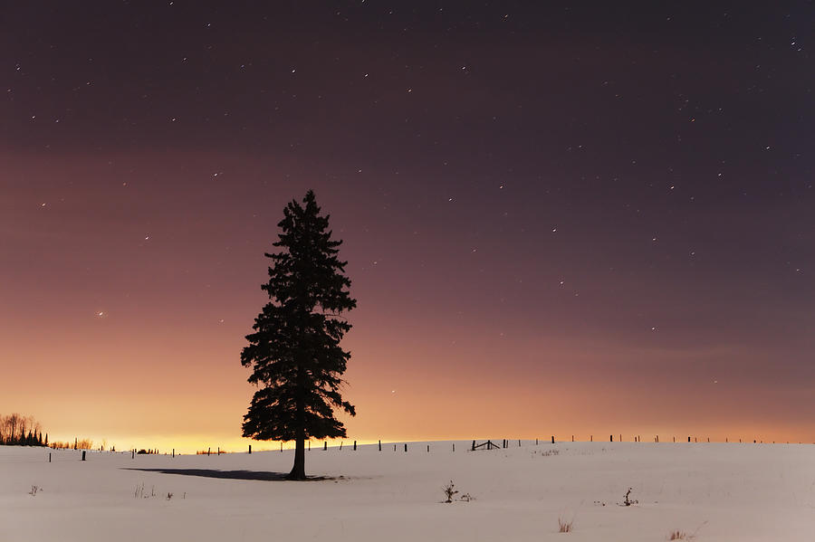 Stars In The Night Sky With Lone Tree Photograph