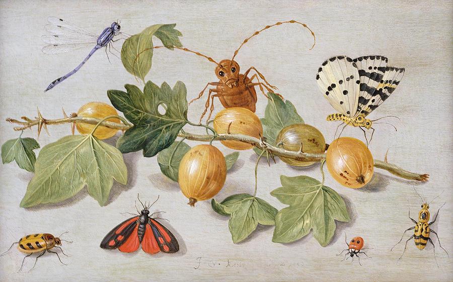 Gooseberry Painting - Still Life Of Branch Of Gooseberries by Jan Van Kessel