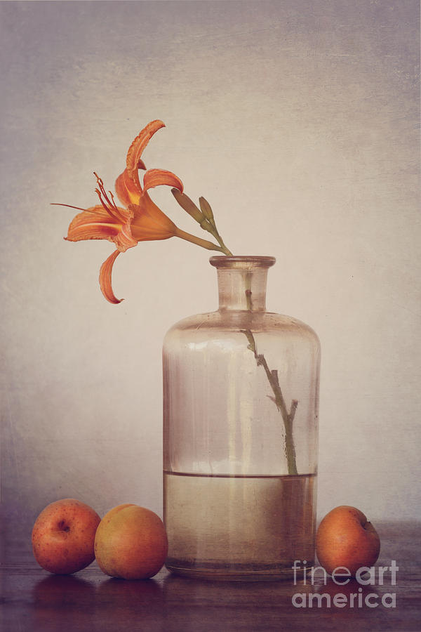 Still Life With Apricots Photograph