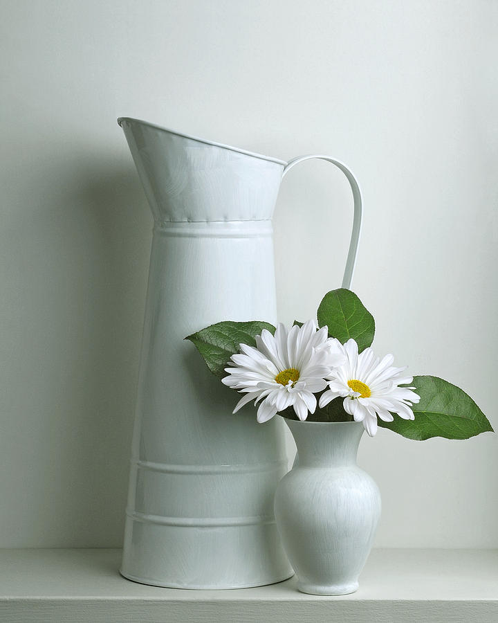Still Life With Daisy Flowers Photograph