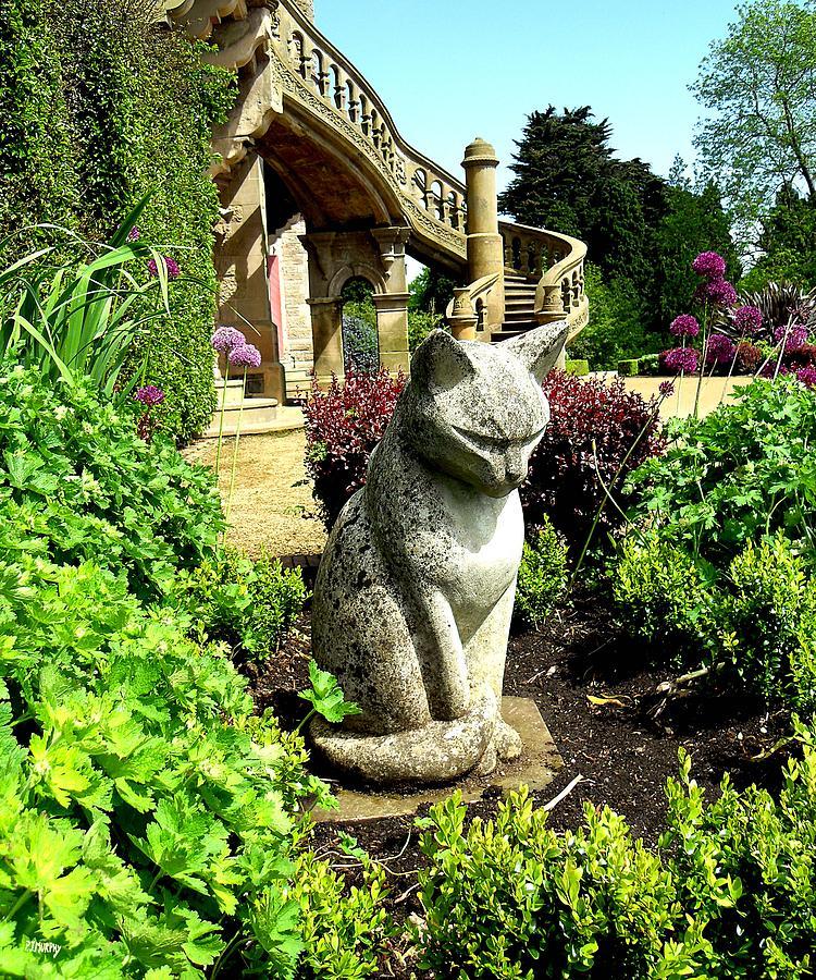 Stone Cat Photograph