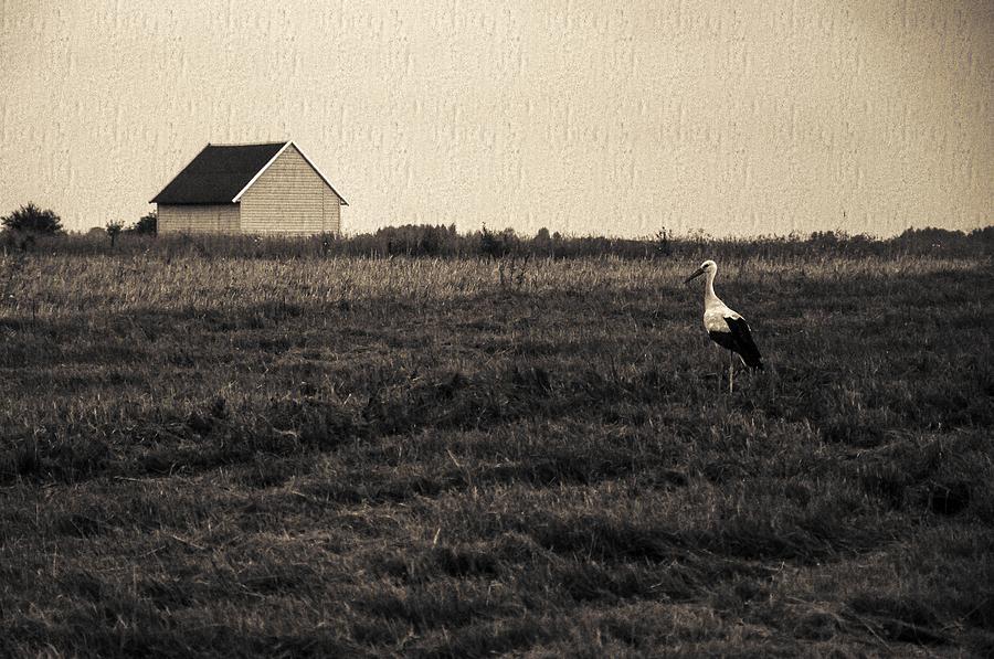 Storks Tale Photograph