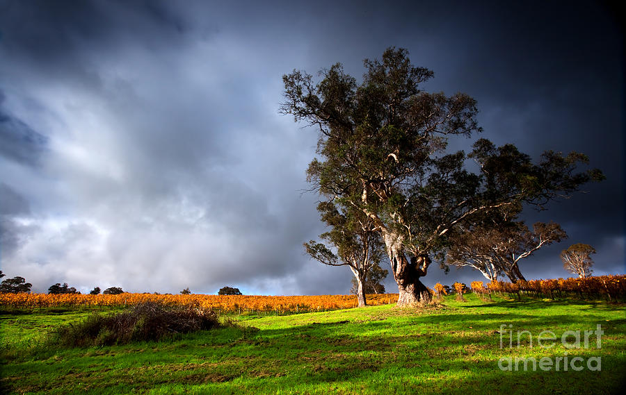 Storm Onto A Vineyard Photograph  - Storm Onto A Vineyard Fine Art Print
