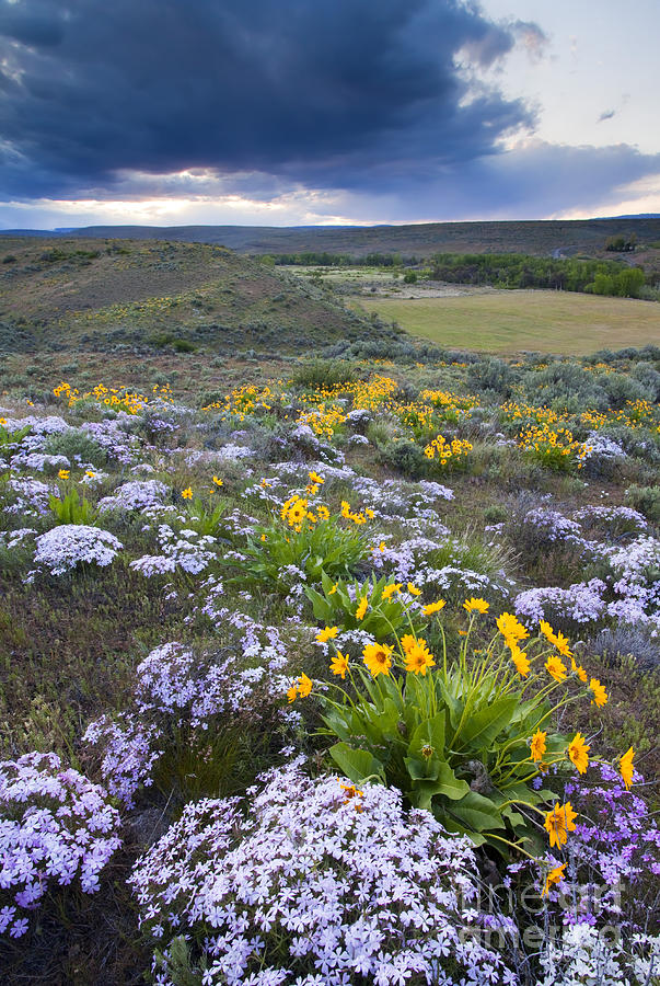 Storm Over Wildflowers Photograph  - Storm Over Wildflowers Fine Art Print