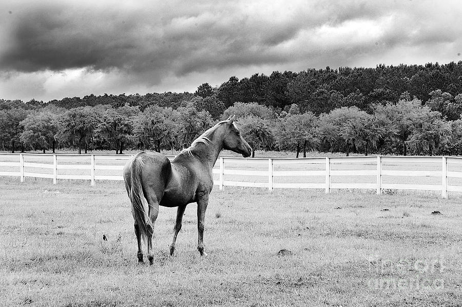 Stormy Pasture Photograph