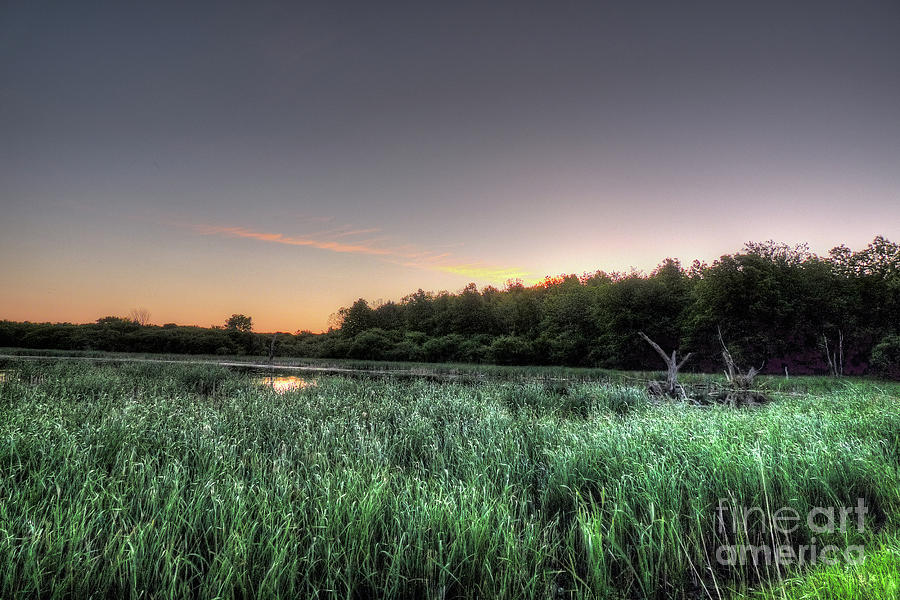 Streaky Swamp Sunrise Photograph  - Streaky Swamp Sunrise Fine Art Print