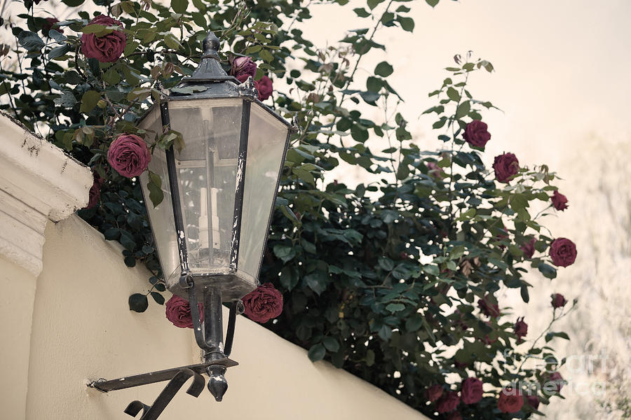Streetlight Surrounded By Roses Photograph