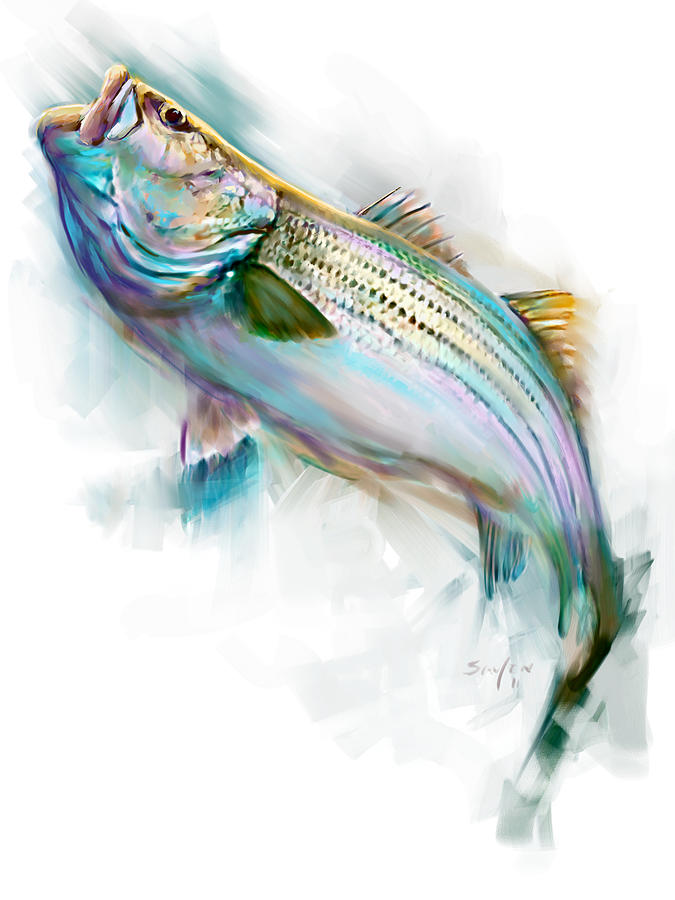 Striper rise painting by savlen art for Bass fish painting